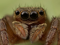Small brown jumper (stacked) photo by kiernter