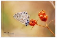 Piccolo fascino della natura... photo by oraziopuccio