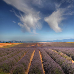 I like the Provence photo by rinogas