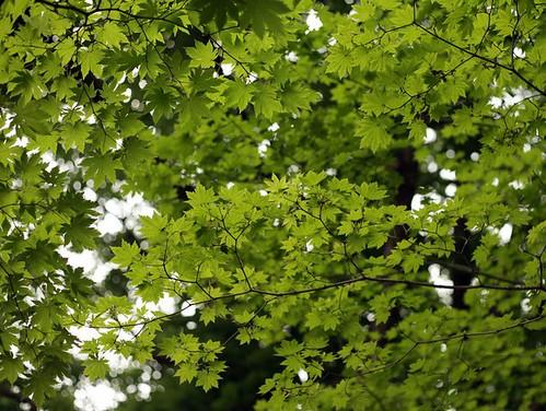 2011.5.31 首爾的綠意