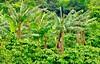 32439732145_7ceae94feb_t