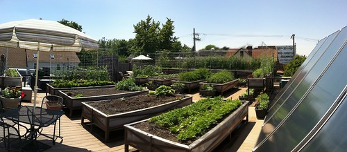 Roof Top Farm at uncommon ground  a - photo Michael Cameron