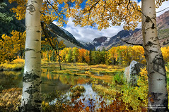 Glory of Autumn in the Sierra Nevada photo by Darvin Atkeson