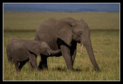 Elephant photo by Judith Nicolai