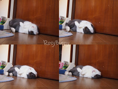 Hoppi Flop photo by RosyBunny