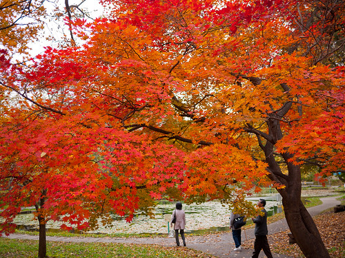 Colored Leaves at Hokkaido University