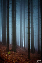 Foggy Forest photo by David Pinzer