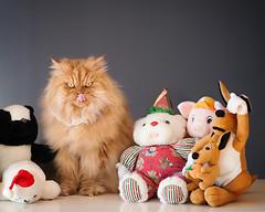 Garfi-I am not a toy!!! photo by E.L.A