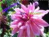 6214665977_17e4da84f5_t