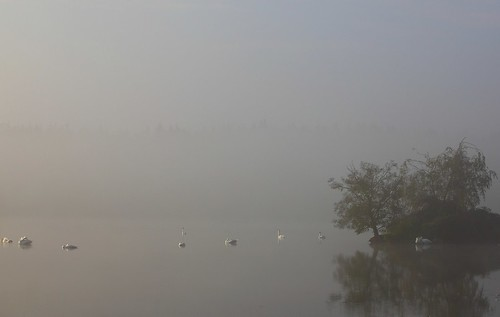 foggy swanisland photo by neurodoc2010