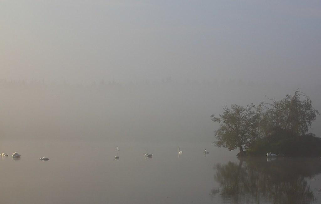 foggy swanisland photo by neurodoc2010