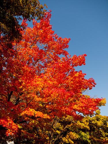 Fall - Sapporo Art Park