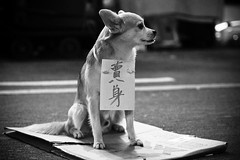 Poor dog...[Nov 12th Explored] photo by anthonyleungkc