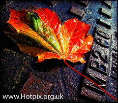 iPod Shuffle2 - Sweet Leaf photo by @HotpixUK -Add Me On Ipernity 500px
