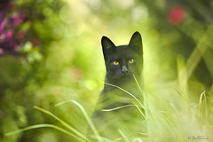Black Cat photo by Ben Heine
