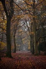 autumn lane photo by tilman paulin