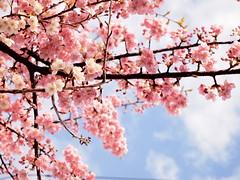 もうすぐ春ですね photo by Neconote