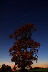 Twilght Autumn Oak photo by jammo s