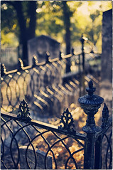 Fence Friday ~ Sonora edition photo by Irene2005