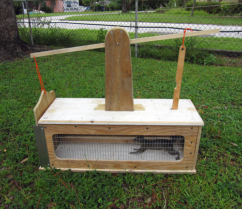 Box Trap for Squirrels