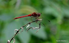 DSC_2216-1 photo by Kavin Chawla