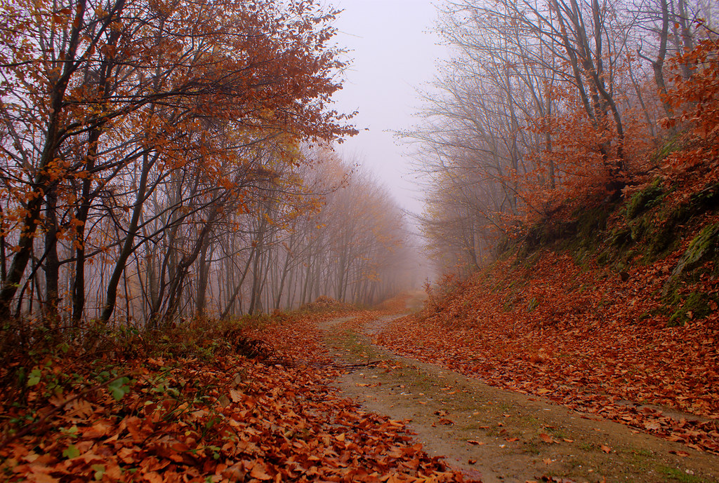 Fall Road   [Explored] photo by nikolaos p.