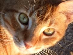eyes(: photo by kellykarstadt