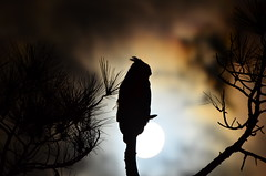 Owl & the Moon photo by Coty Coghill