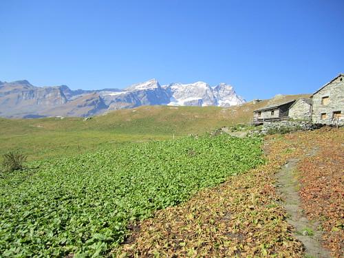 Il Monte Rosa dall'alpe Campo