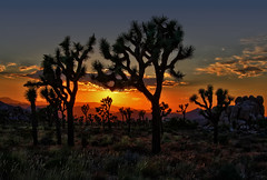 A Colorful Sunset in Joshua Tree photo by Dave Toussaint (www.photographersnature.com)