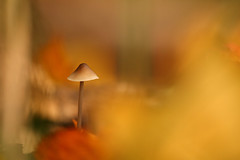 mushroom in autumn colors photo by zoomyboy.com