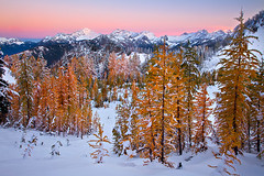 Land of the Larch photo by KPieper