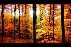 - Farbexplosion im Herbstwald - photo by Haldorfer