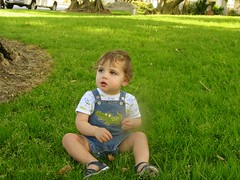 Xander in the Olive Grove