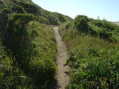 Abbotts Lagoon - Trail