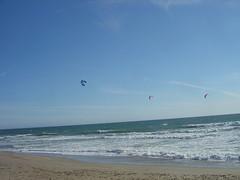 Scotts Creek Beach - Kite Surfers