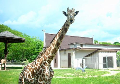 Zoo IX