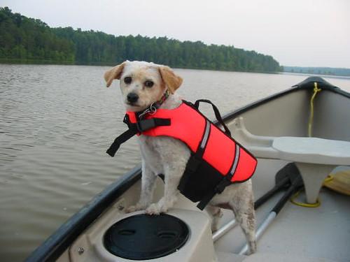 Muffin in canoe 4