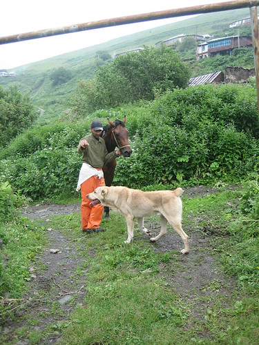 khevsur-dog-horse