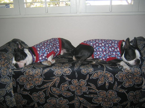 tired terriers