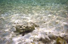 Fish, Serenity Beach, Castaway Cay, Bahamas
