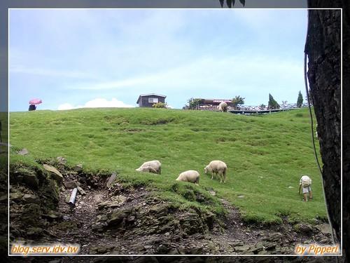清境 live 之天氣超好的青青草原