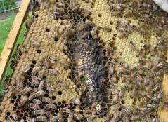 Beekeeping 2068
