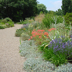 beth chatto dry garden