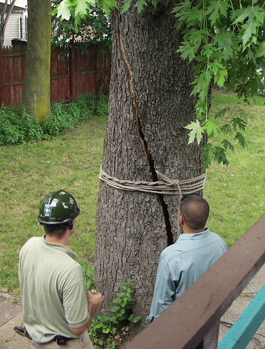 tree with rope