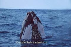 Baleia sozinha
