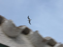 Lesbian Seagull