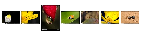 Macro shots with a reversed Sigma 18-50mm f/3.5-5.6 on a D50, by Kevin