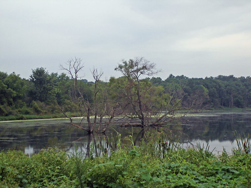 Celery Bog - South end