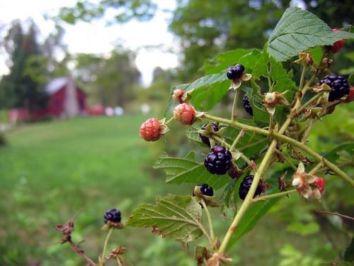 cabinandberries
